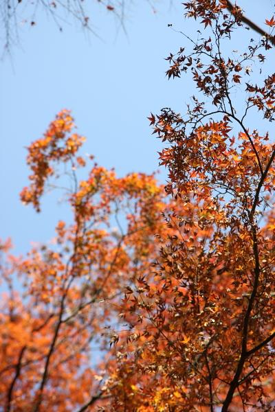 公園內有楓葉還蠻漂